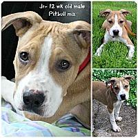 Adopt A Pet :: Jr - Evansville, IN