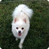 Adopt A Pet :: Jewel - Calgary, AB