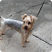 Adopt A Pet :: Beau - Conroe, TX