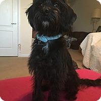Adopt A Pet :: Pancha - Ft. Collins, CO