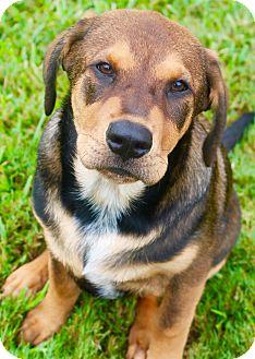 Hound (Unknown Type) Mix Puppy for adoption in Fort Atkinson, Wisconsin - Magellin