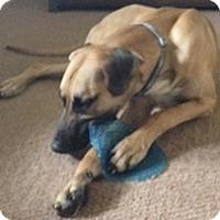 Adopt A Pet :: Hank - Stevens Point, WI