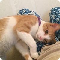 Adopt A Pet :: Meeko - Colmar, PA