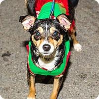 Adopt A Pet :: Padme - Owensboro, KY