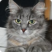 Adopt A Pet :: Lauren - Ephrata, PA