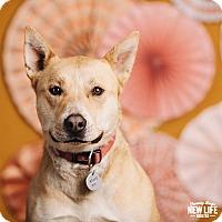 Adopt A Pet :: Bell - Portland, OR