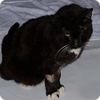 Adopt A Pet :: Jasper - St. Louis, MO