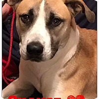 Adopt A Pet :: Chance - West Hartford, CT