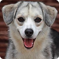 Adopt A Pet :: Oreo von Ornbau - Los Angeles, CA