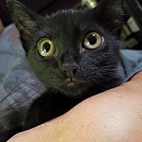 Adopt A Pet :: CUB - Ocala, FL