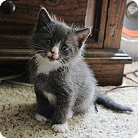 Adopt A Pet :: Dash - Mount Mourne, NC