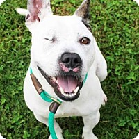 Adopt A Pet :: Diva - Atlanta, GA