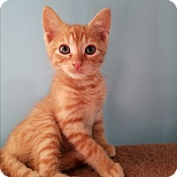 Adopt A Pet :: Jelly Bean - Stafford, VA