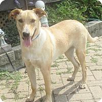Adopt A Pet :: Heatho - West Chicago, IL