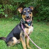 Adopt A Pet :: RUKUS - Gloucester, VA
