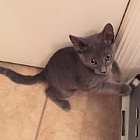 Adopt A Pet :: Ellie-Phant - Glendale, AZ