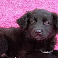 Adopt A Pet :: Thatcher - Los Angeles, CA