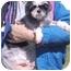 Photo 4 - Shih Tzu Dog for adoption in Grass Valley, California - Mildred