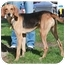 Photo 1 - Coonhound Mix Dog for adoption in Howell, Michigan - Ducky