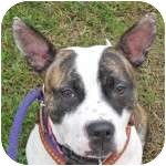 Terrier (Unknown Type, Medium) Mix Dog for adoption in Eatontown, New Jersey - Tiny