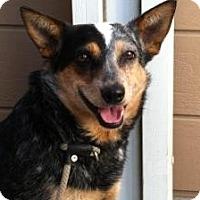 Adopt A Pet :: Pepper - Canoga Park, CA