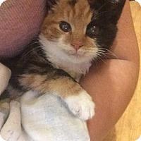 Adopt A Pet :: Nina - Pittstown, NJ