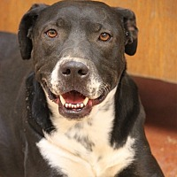 Adopt A Pet :: Brantley Gilbert - Hooksett, NH