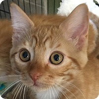 Adopt A Pet :: Pouncy - Winchester, CA