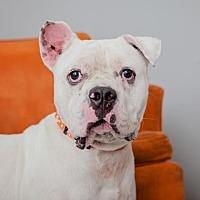 Adopt A Pet :: Alvin - Mission Hills, CA