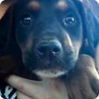 Adopt A Pet :: Petra - Barnegat, NJ