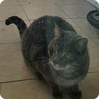 Adopt A Pet :: Trevor - Laguna Woods, CA