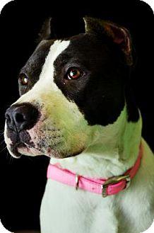 Terrier (Unknown Type, Medium) Mix Dog for adoption in Fort Smith, Arkansas - Sasha
