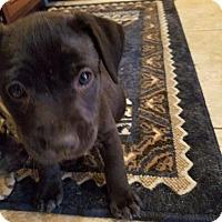 Adopt A Pet :: London - Winchester, CA