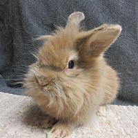 Adopt A Pet :: Brutus - Newport, DE