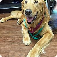 Adopt A Pet :: Beau III - BIRMINGHAM, AL