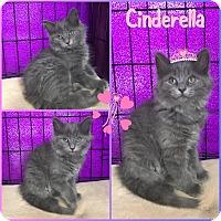 Adopt A Pet :: Cinderella - Jeffersonville, IN