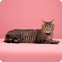 Adopt A Pet :: Chiquita (Extra Shy) - Cary, NC