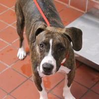 Adopt A Pet :: BUDDY - Daytona Beach, FL