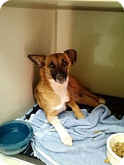 Terrier (Unknown Type, Small) Mix Dog for adoption in Sterling, Colorado - Hazel