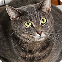 Adopt A Pet :: Shadow - Salem, OH