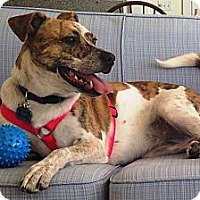 Adopt A Pet :: Lola - in Maine - kennebunkport, ME