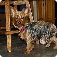 Adopt A Pet :: Bonnie - Mt Gretna, PA