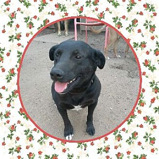 Labrador Retriever Mix Dog for adoption in Duart, Ontario - Buddy