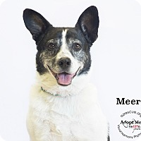 Adopt A Pet :: Meera - Phoenix, AZ