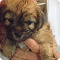 Adopt A Pet :: Puppies Boys - Sacramento, CA