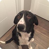 Adopt A Pet :: Paige - Saskatoon, SK