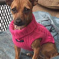 Adopt A Pet :: Bambi - San Francisco, CA