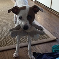 Adopt A Pet :: Ruby - Charlotte, NC