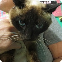 Adopt A Pet :: Ginger Ale - Coos Bay, OR