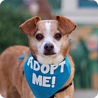 Adopt A Pet :: Hamilton - Pacific Grove, CA